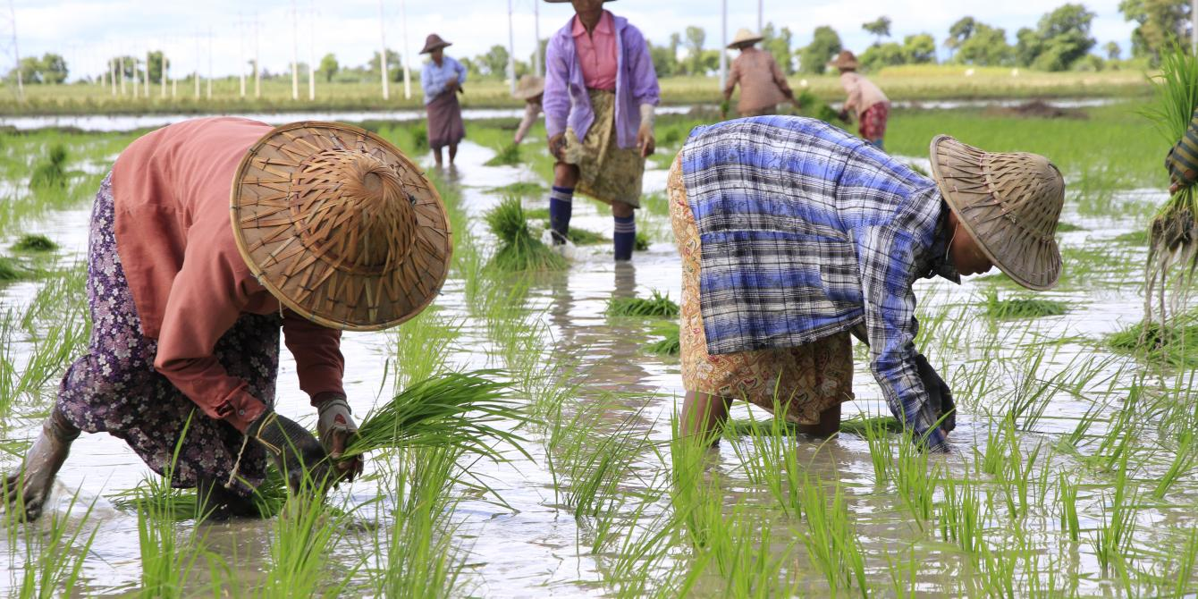 Women farmers are planting rice during the monsoon season in Myanmar. Photo by: Kaung Htet/ Oxfam